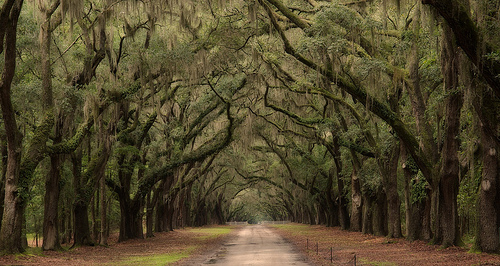 Things to do in Savannah Ga: Drive through Wormsloe Oaks