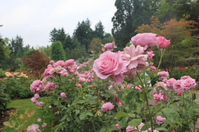 Sweetness at Rose Garden