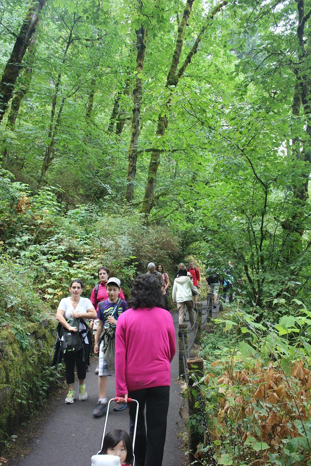 Multnomah Waterfall Trail
