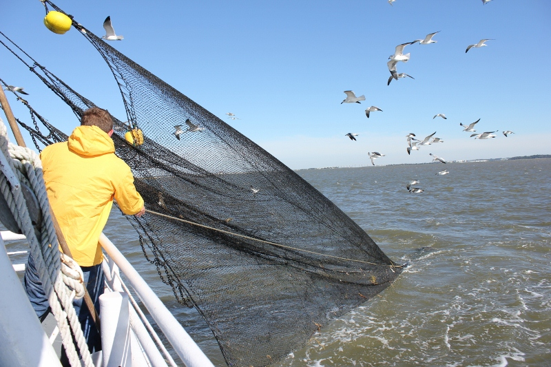 Pulling in the Shrimping Net