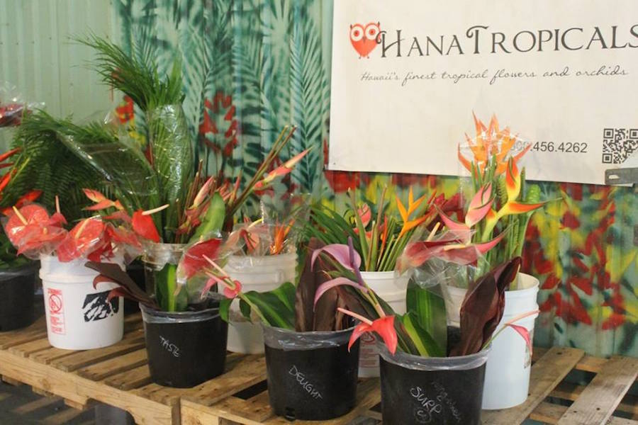 Hana Tropicals: One of the Best Road to Hana Stops on the Hawaiian Island of Maui