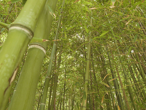 Best Things to do in Maui: Walk through the Bamboo Forest