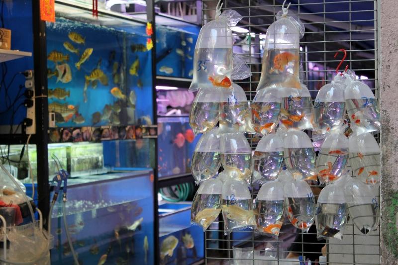 Hong Kong Goldfish Market