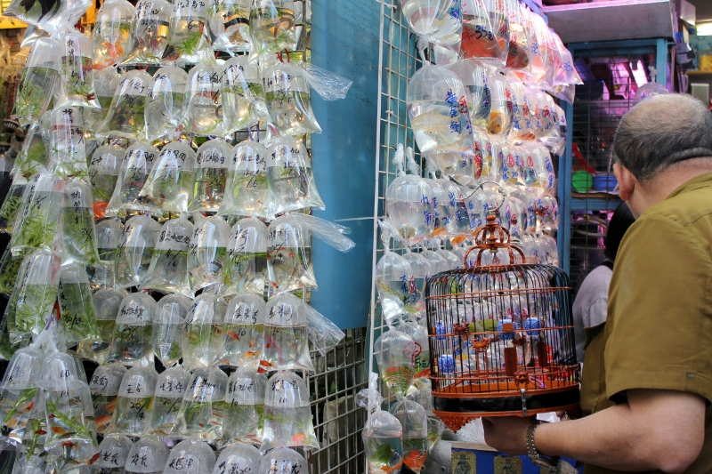 Goldfish Market: Hong Kong Bucket List: Best Things to Do & Top Places to Visit