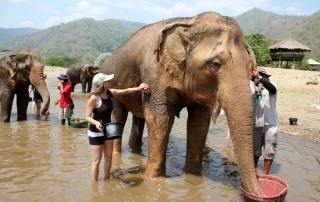 Annette White Bathing Elephants in Thailand