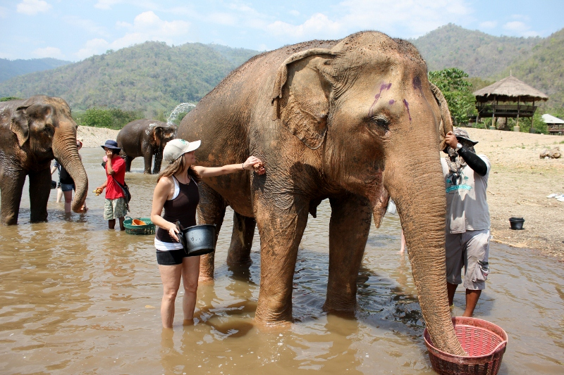 Annette White Bathing Elephants in Thailand | Bucket List
