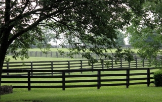 thoroughbred breeding farm in Kentucky