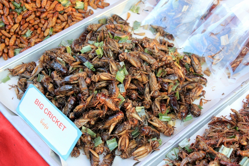 Life List: 100 Amazing Things To Do Before You Die: Eat Insects, Chiang Mai, Thailand