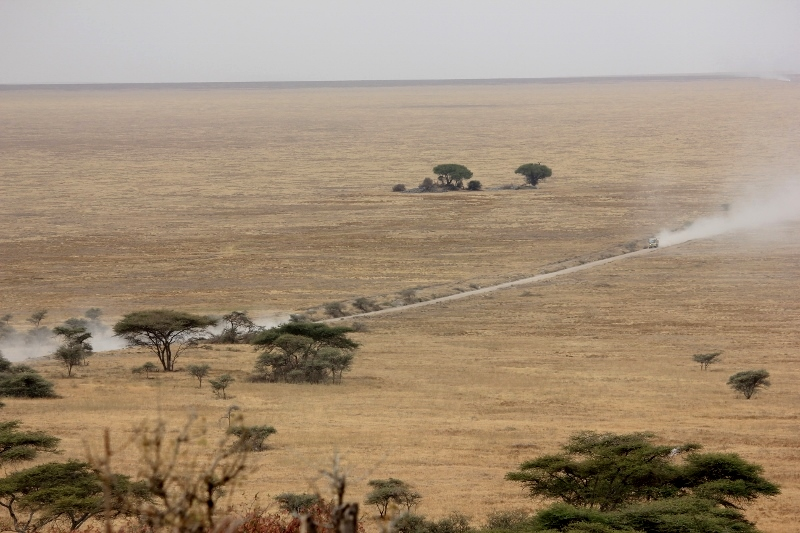 Dusty Road to Serengeti