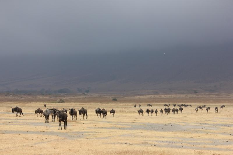 Ngorongoro Safari in Tanzania