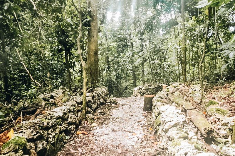 The hike to Jellyfish Lake in Palau