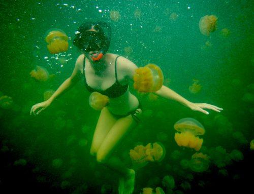 Swim in Jellyfish Lake in Palau, Micronesia