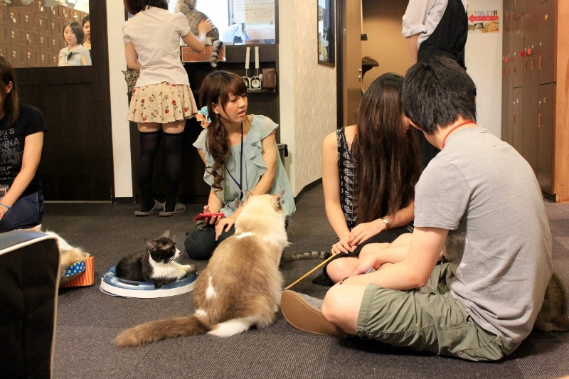 Best Tokyo Bucket List: 44 Top Things To Do, Places to Visit and Attractions in Japan's Coolest City: Visit a Cat Cafe