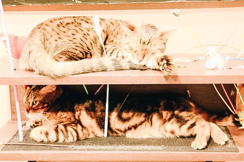 Le meilleur café original au Japon? Le Calico Cat Café de Tokyo à Shinjuku
