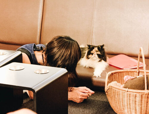 Best Quirky Café in Japan? Tokyo's Calico Cat Café in Shinjuku