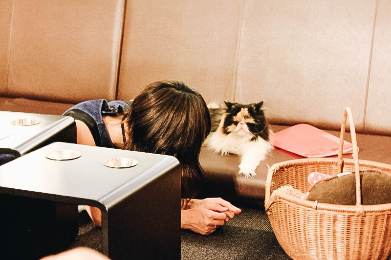 Best Quirky Café in Japan?Tokyo's Calico Cat Café in Shinjuku
