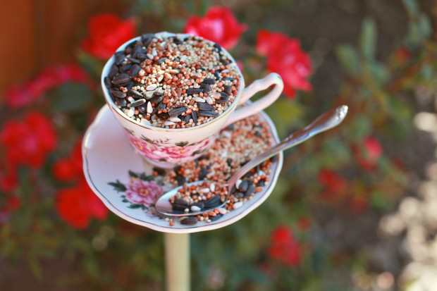 Teacup bird feeder - Spring Bucket List
