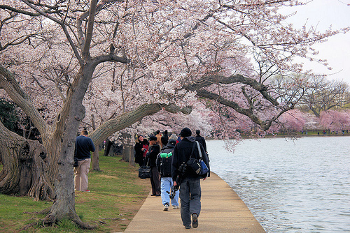 Spring Bucket List - See Cherry Blossoms
