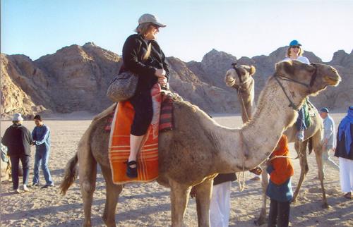 Bucket List Idea: Camel Ride in Egypt