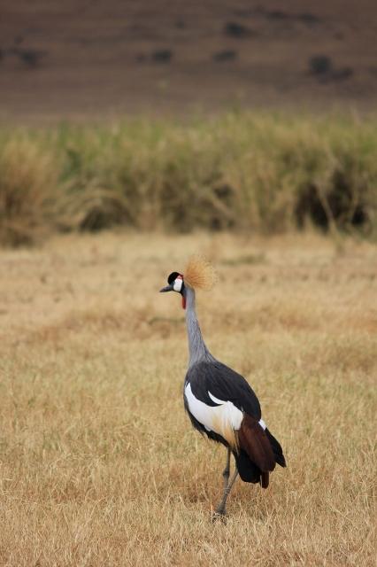 Bird on an African Safari in Tanzania