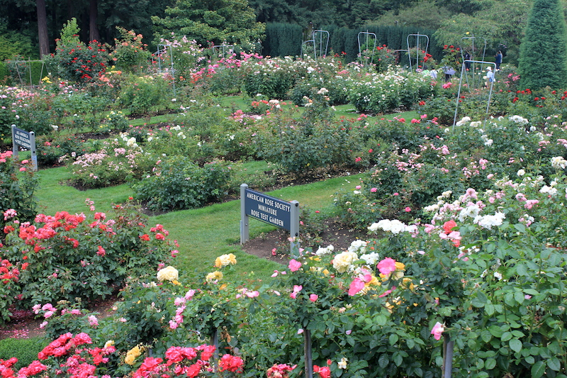 What to do in Portland: Go to the International Rose Test Garden