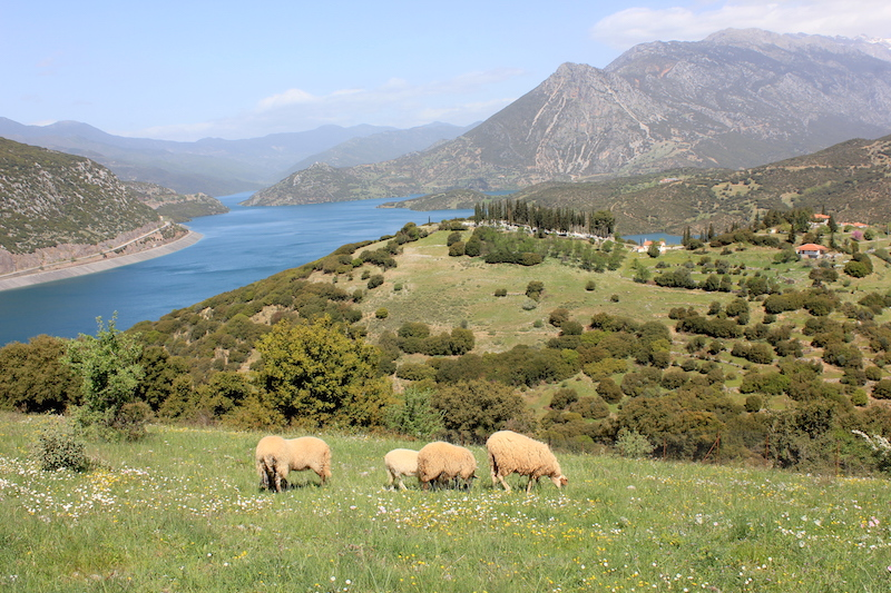 Central Greece Scenery