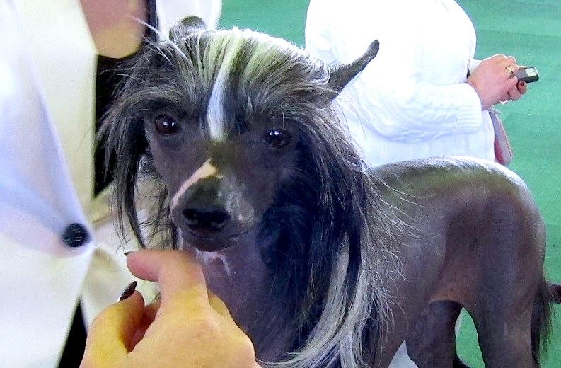 Westminster Dog Show: Dog Bucket List