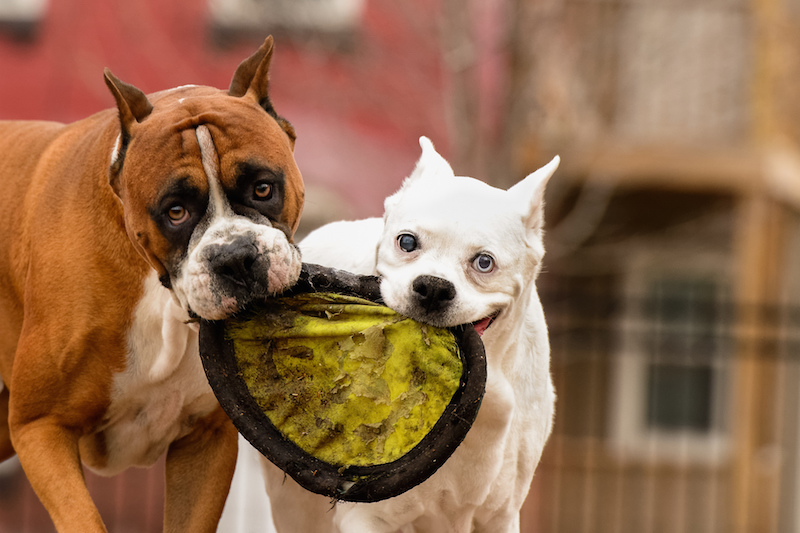 Play Dog Frisbee: Dog Bucket List: 22 Fun Things to do With Your Furry Pet