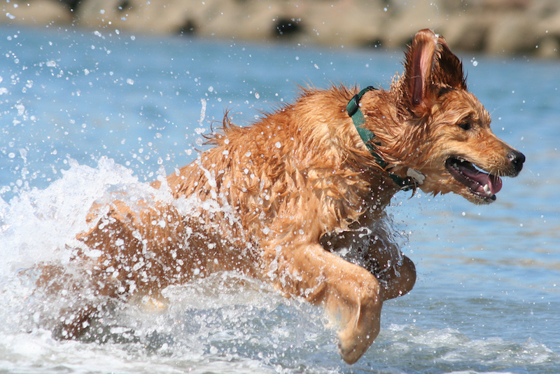 Dog Bucket List: Swim in the Ocean