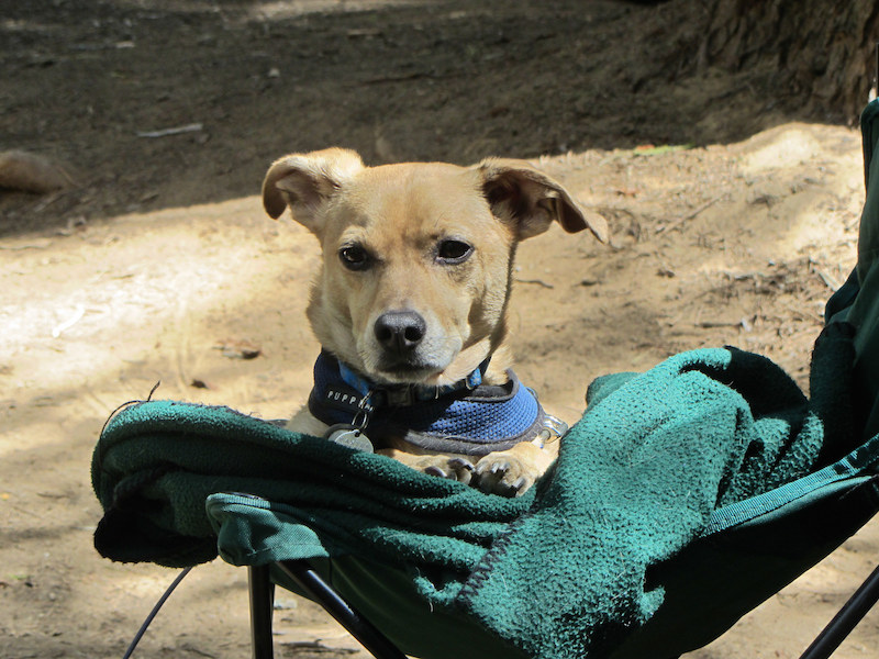 Go Dog Camping: Dog Bucket List: Fun Things to do With Your Furry Pet