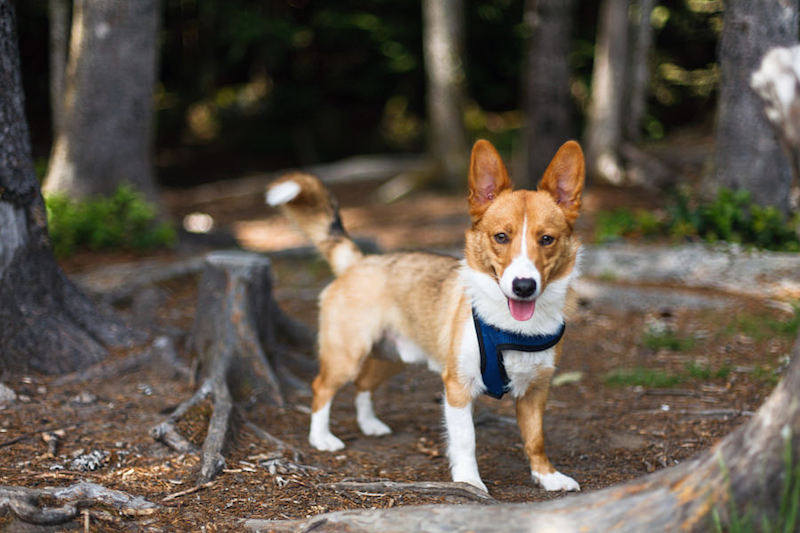 Doggy Things to Do: Go Hiking