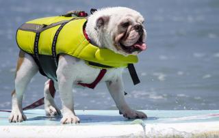 Dog Bucket List: Paddle Board
