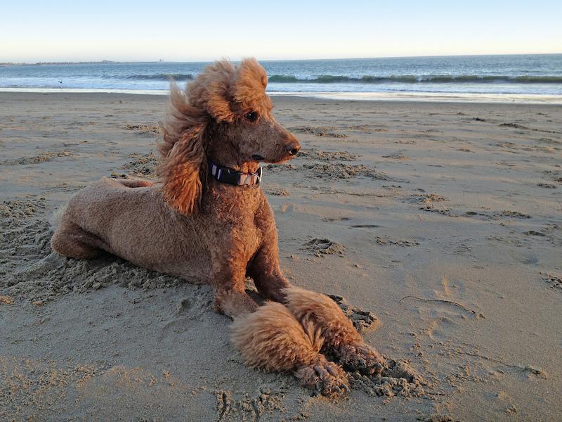 Dog Posing on the Beach