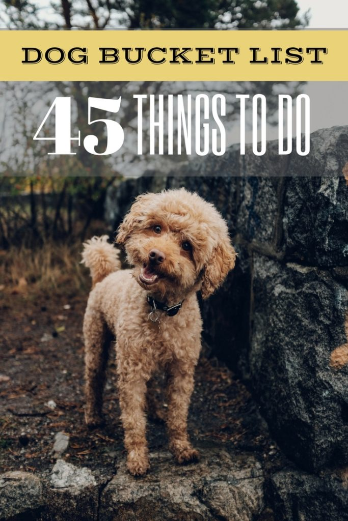 Dog Bucket List: 22 Fun Things to do With Your Furry Pet | Puppy Activities, Dog & Pet Friendly