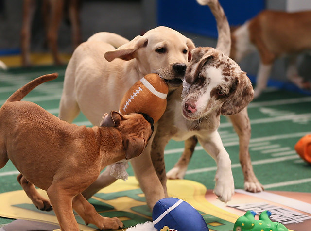 Dog Bucket List: Watch the Puppy Bowl