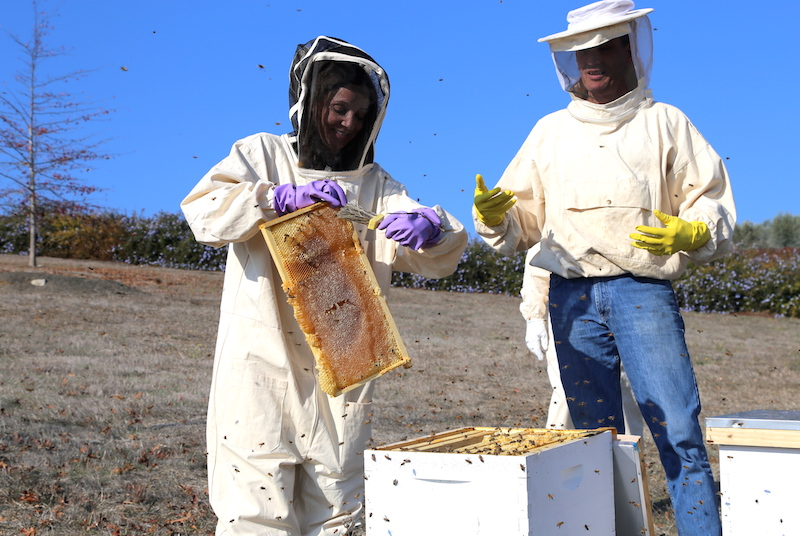 Annette White Beekeeping in Petaluma - extracting honey