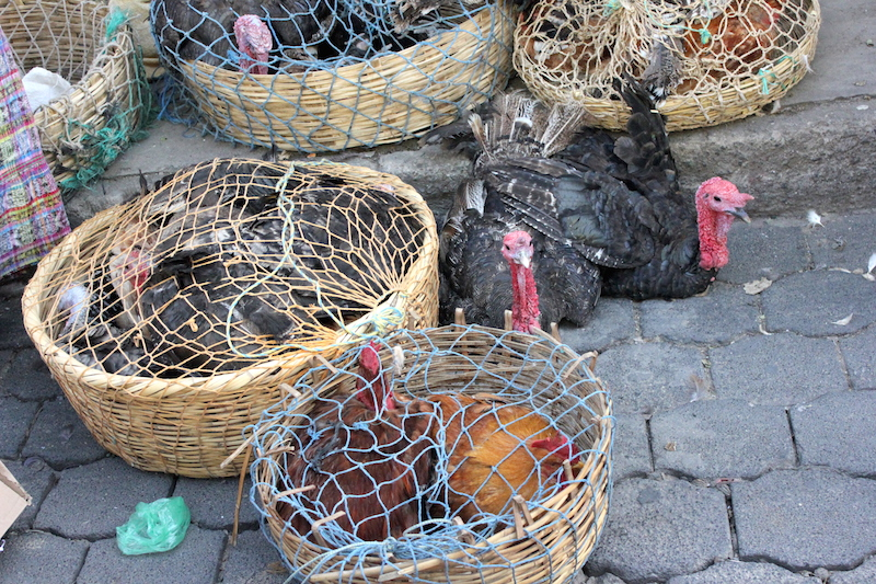 Chickens for Sale at Chichi Market in Chichicastenango Guatemala