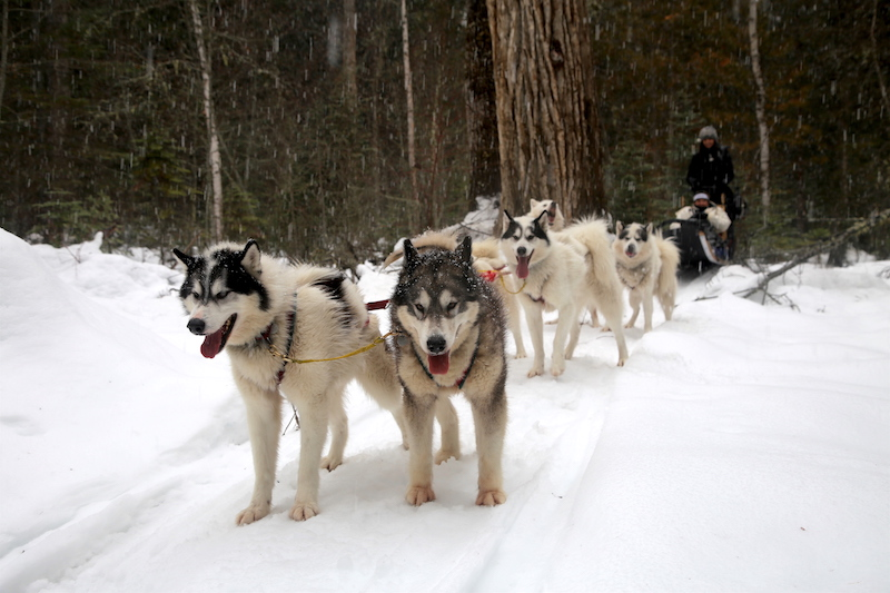 Go Dogsledding: Life List: 100 Amazing Things To Do Before You Die