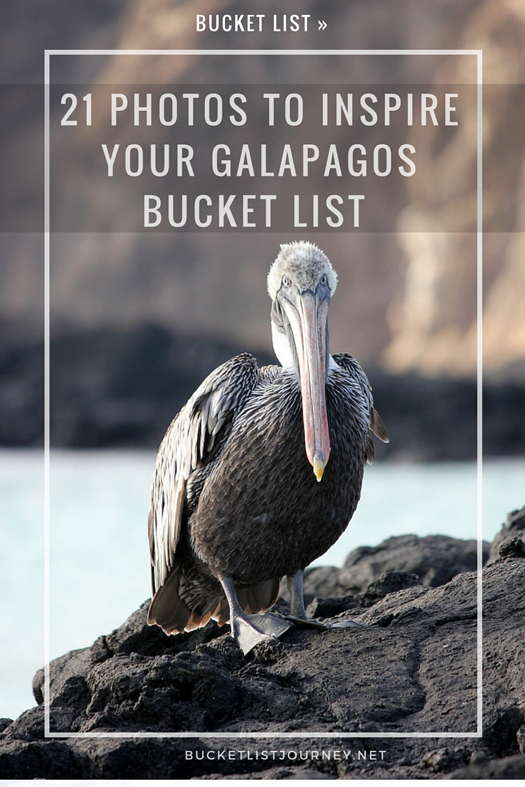 21 Photos to Inspire Your Galapagos Islands Bucket List