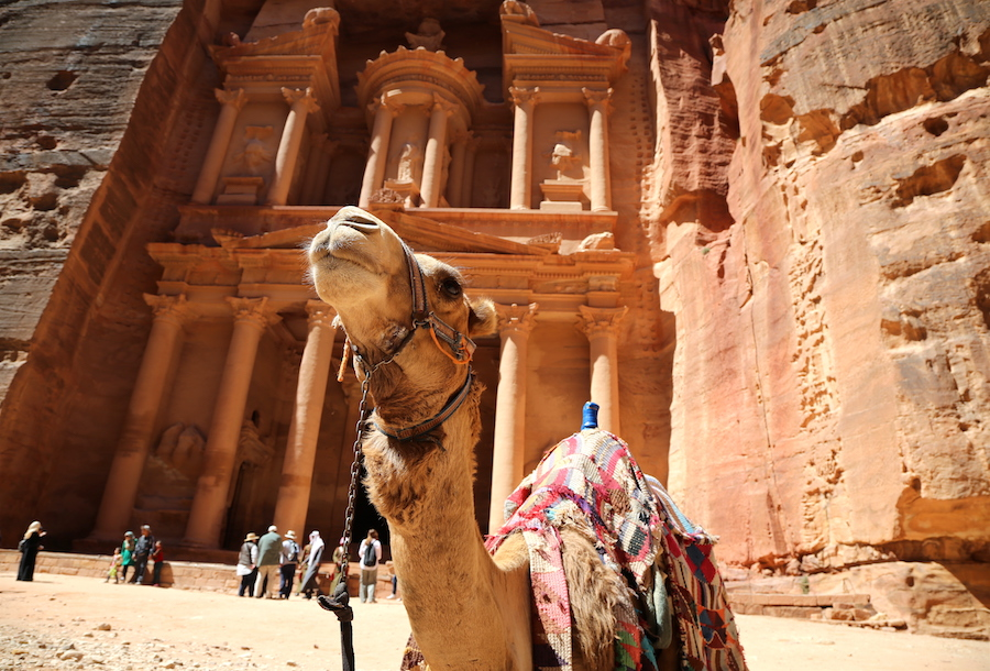 Camel in front of the Treasury in Petra Jordan