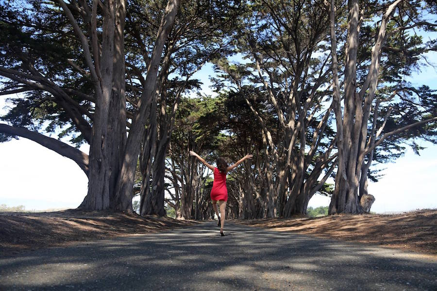 The Tree Tunnel in Inverness, Point Reyes