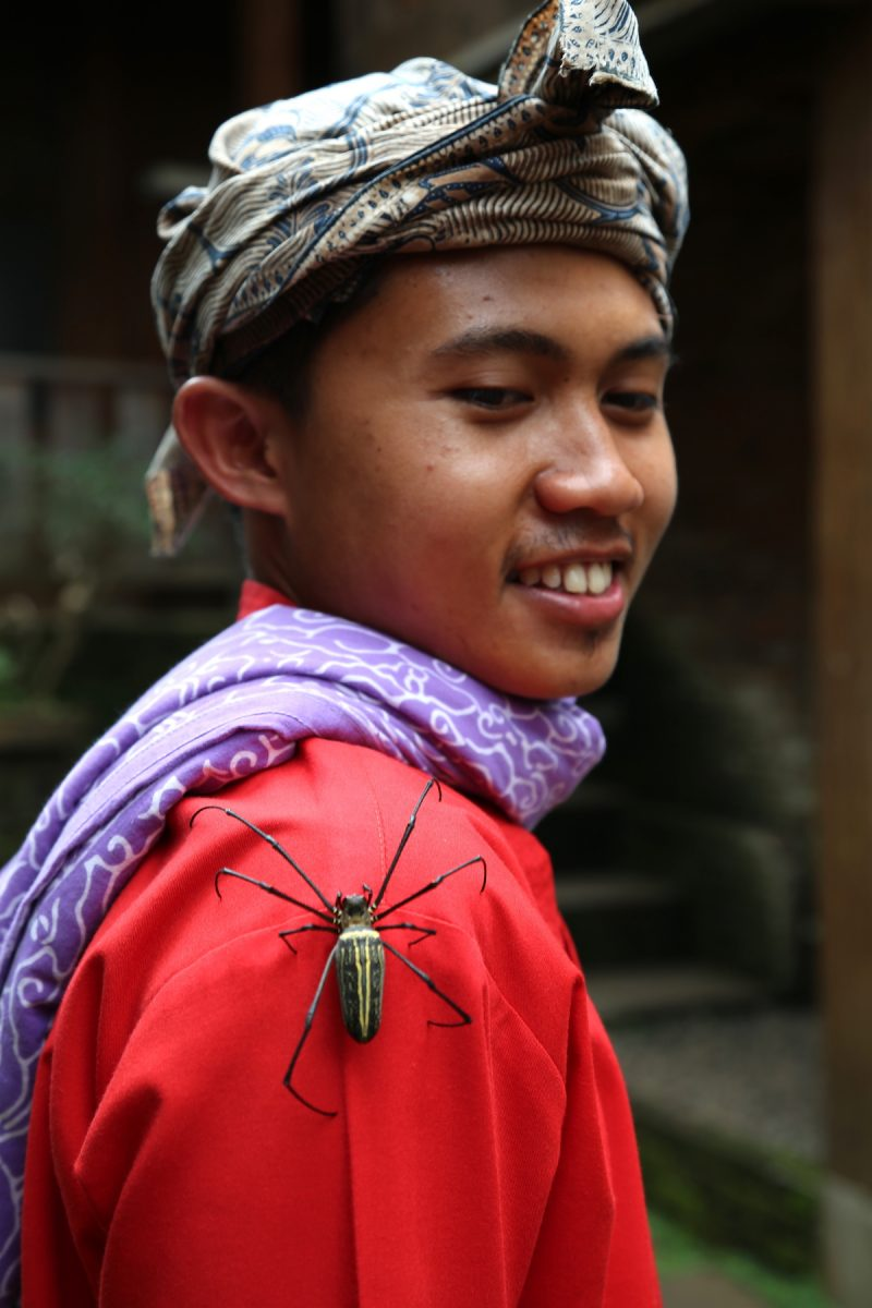 Large spider in Bandung, Indonesia