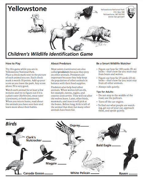 Wildlife Identification Game at Yellowstone National Park
