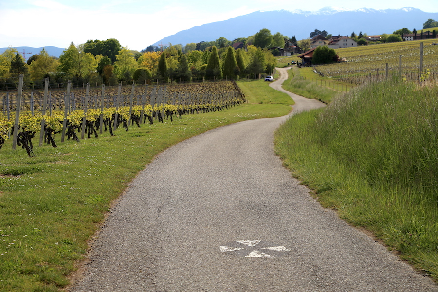 A windy road in the vineyards of Geneva Switzerland