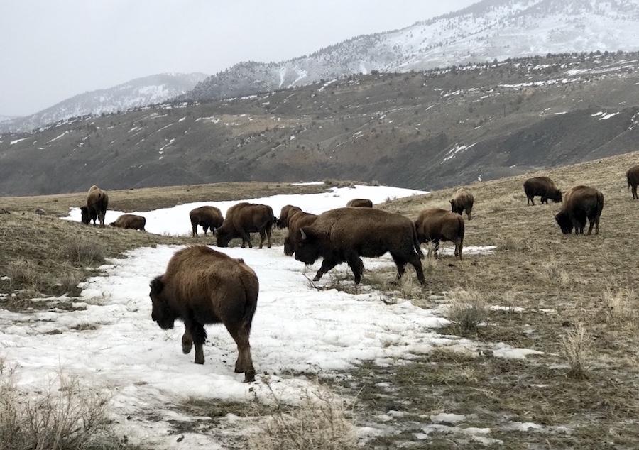 Animal Encounters: 10 Best Wildlife Experiences Around the World