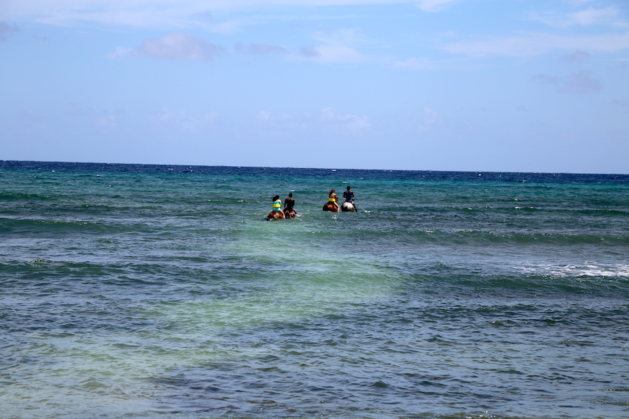 Horses swimming at Half Moon Resort in Montego Bay, Jamaica
