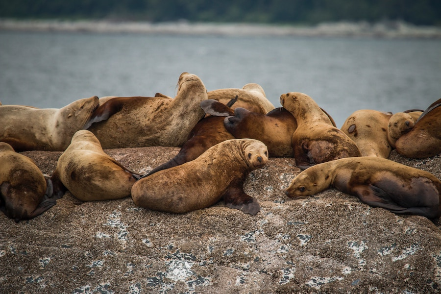 Alaskan Cruise seals