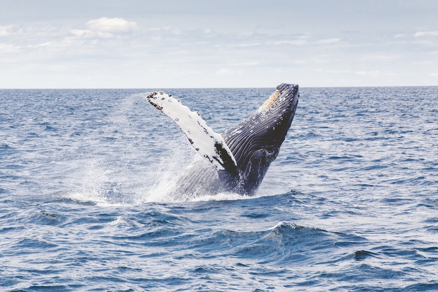 A whales tale in Alaska