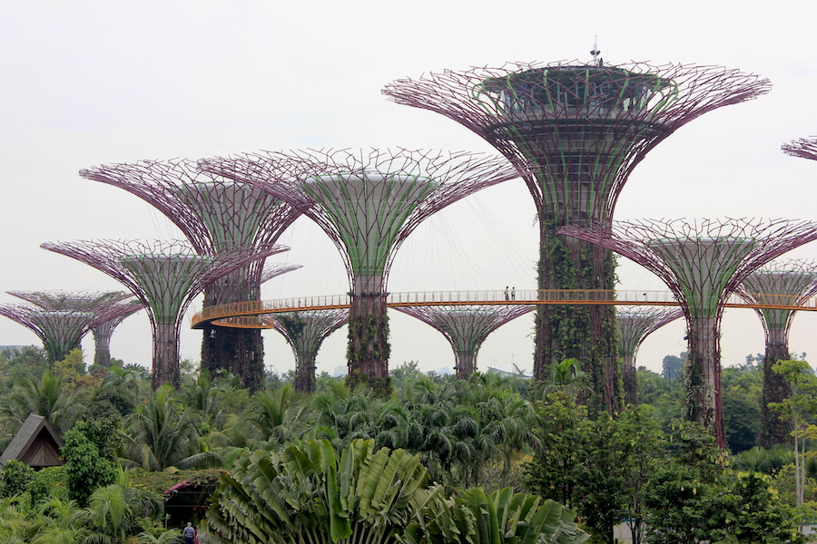 Singapore Tourist Attraction: Gardens by the Bay Supertrees