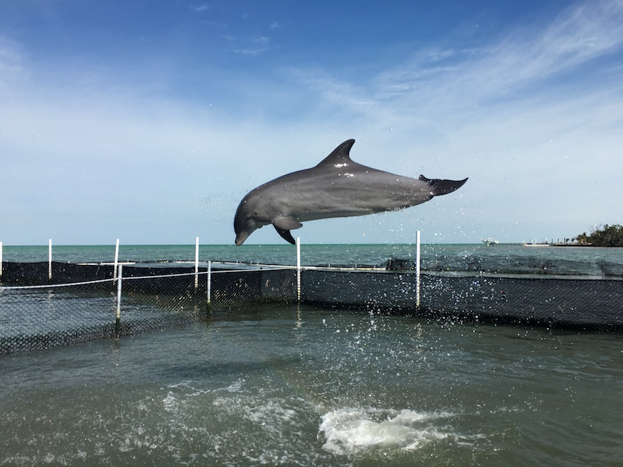 Visit the Dolphin Research Center | Florida Keys Islands Bucket List: Best Things to do in Key West & Beyond